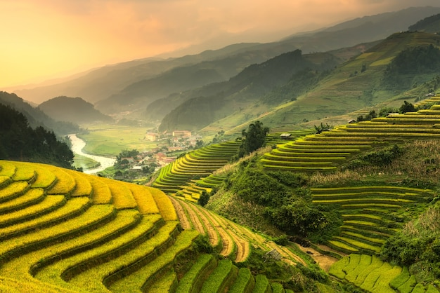 Terraced rice paddy field landscape of northern vietnam