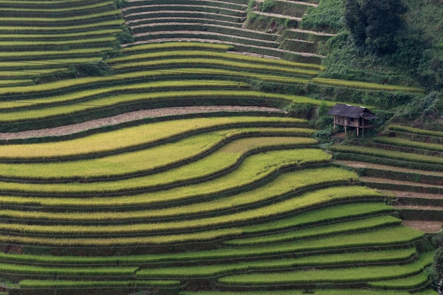 Террасный пейзаж рисовых полей му канг чай, йенбай, северный вьетнам