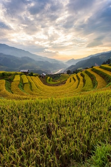 Пейзаж террасных рисовых полей му кангчай