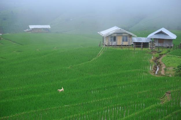 Pa 봉 paing 마을, 치앙마이, 태국에서 테라스 논
