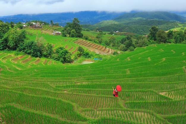 Terraces rice field at pa bong paing village, chiang mai, thailand Premium Photo
