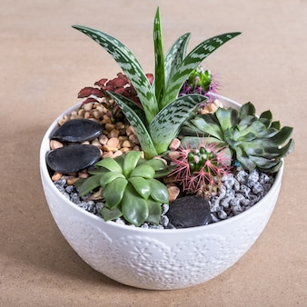 Terrarium plant in the ceramic pot