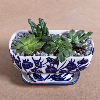 Terrarium plant in the decorated ceramic pot