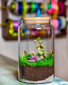 유리 항아리에 테라리움 식물