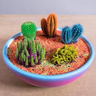 Растение террариум в красочном керамическом горшке