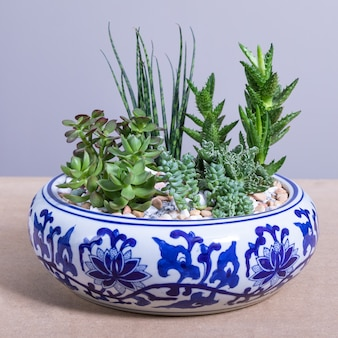 Растение террариум в декорированном керамическом горшке