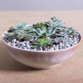 Растение террариум в красном керамическом горшке