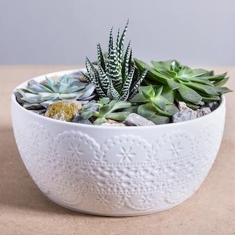 Растение террариум в белом керамическом горшке