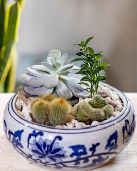 Terrarium plant in pot, with cactus, succulent