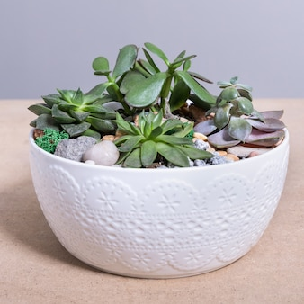 Terrarium plant in the white ceramic pot