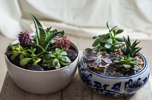 선인장, 즙이 많은 근접 촬영과 함께 냄비에 테라리움 식물