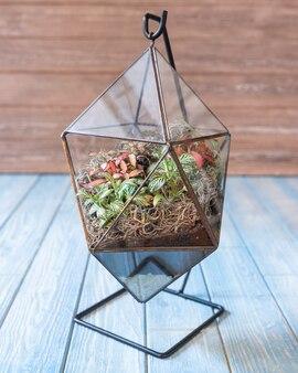 テラリウム、砂、岩、多肉植物、サボテン、コケのガラス