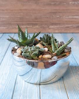 テラリウム、砂、岩、多肉植物、サボテン、光沢のある鍋の苔