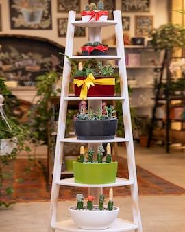 Террариумы на лестнице в садовом магазине