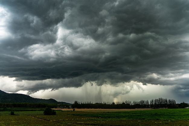 Terrible summer thunder storm over plantation