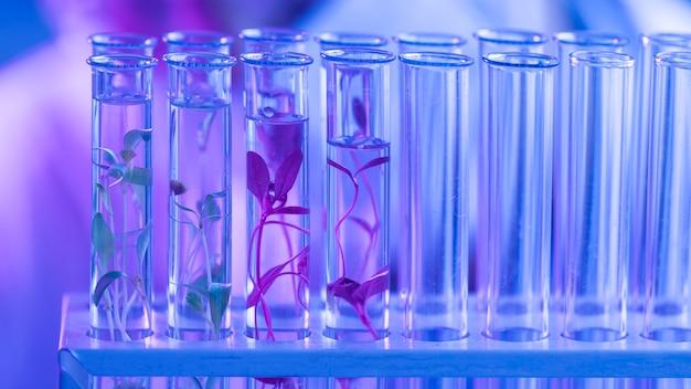 Пробирки в лаборатории биотехнологии