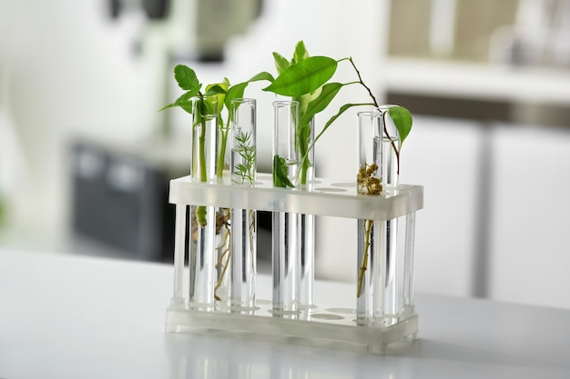 Test tubes with plants on table against blurred