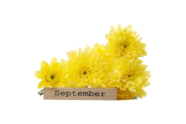 Сентябрь текст и цветы, изолированные на белом фоне