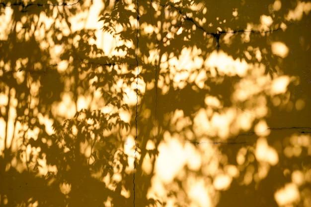 Абстрактный фон textuer тени листьев на бетонной стене
