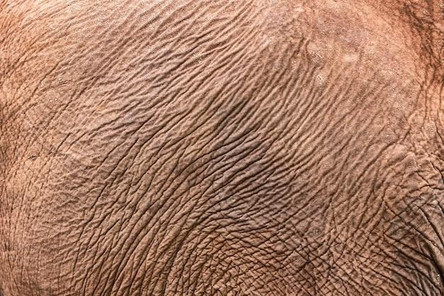 Texture of african elephant skin. elephant skin background pattern.
