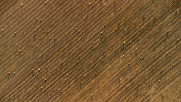 Texture of agricultural field with hay rolls top view