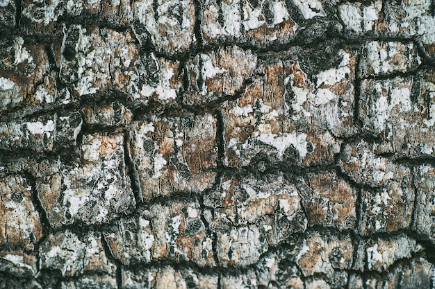 Texture of an ancient tree trunk