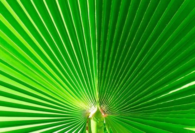 Текстура и узор зеленого пальмового листа на солнце пальмовый лист крупным планом фон