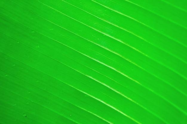 바나나 잎의 질감 배경
