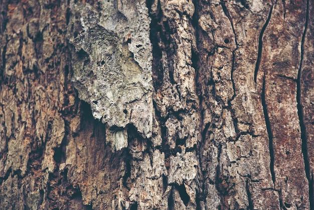 樹皮のテクスチャの背景