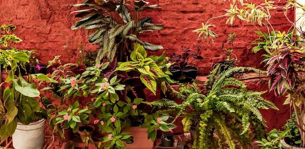 다양하고 다채로운 열대 식물의 질감 배경. 열대 정원