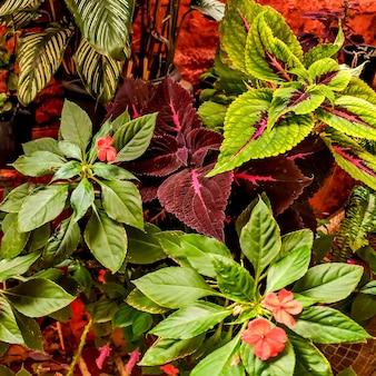 다양하고 다채로운 열대 식물의 질감 배경.