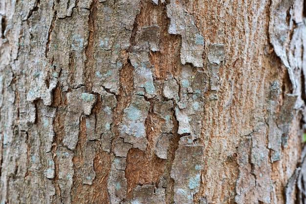木の樹皮のテクスチャ背景