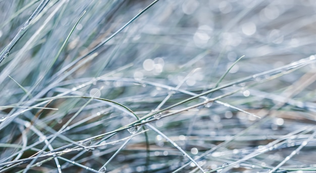 雨滴ボケ光と装飾的な草の青いフェスクのテクスチャ背景パターン