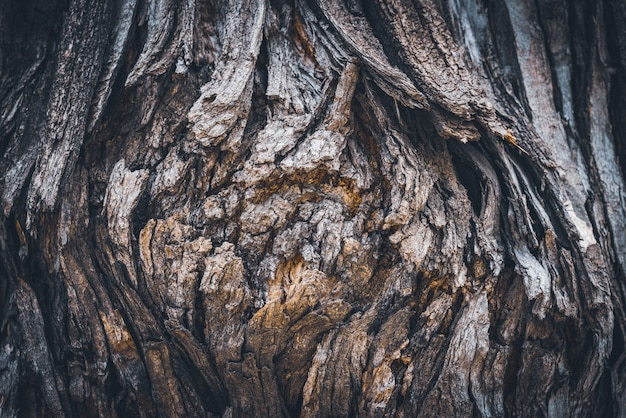 Texture of the bark of a styphnolobium japonicum commonly known as pagoda tree