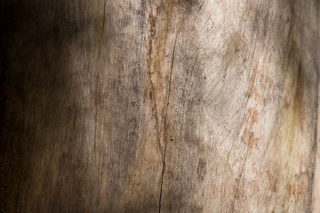 Texture of bark wood use as natural background texture of spruce