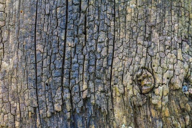 Texture of bark wood
