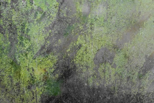 Texture of black grunge glassand green moss