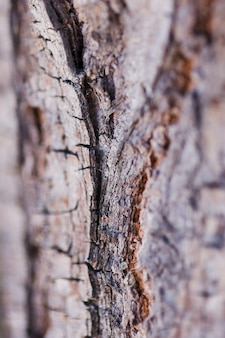 Texture of close up wood