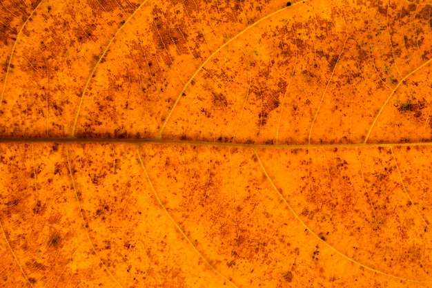 Texture and detail of orange dry leaves - background