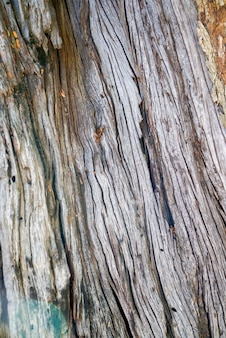 Texture & details of of tree trunk