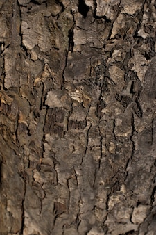 Texture from the bark of an old apple tree