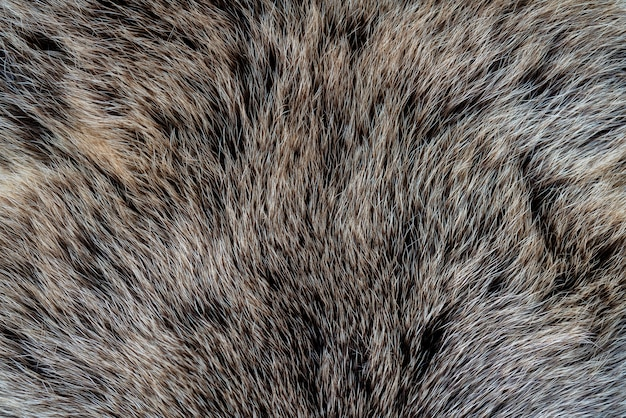 The texture of the fur of a bear. skin of a wild animal.