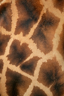Texture giraffe pattern background
