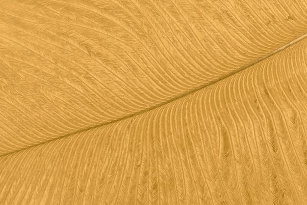 Texture of golden ostrich feather closeup