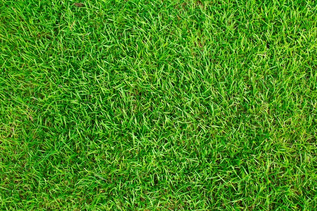 Grass Texture Vectors Photos And Psd Files Free Download