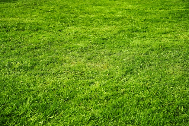 Texture green juicy fresh grass backgroun on a sunny day