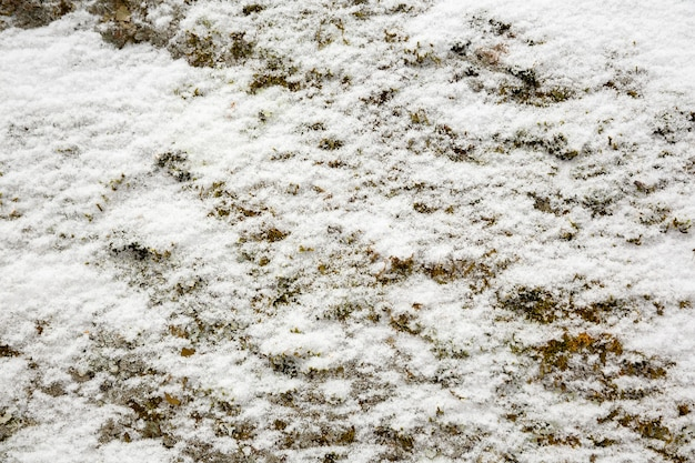 Texture of green moss growing on stone covered with white snow