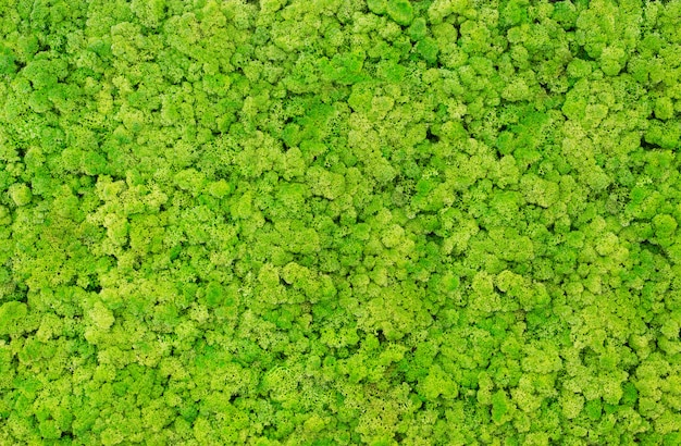 Texture of green moss on the wall