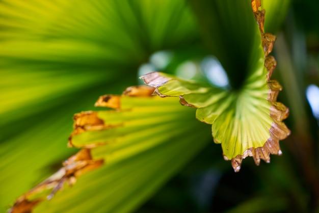Текстуры листья фон зеленый крупным планом