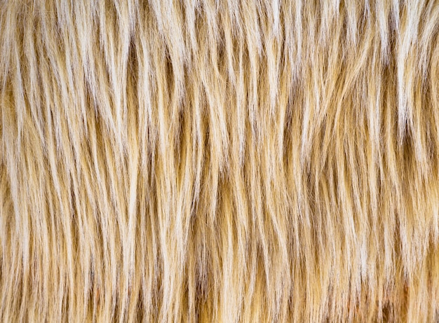 Texture of long pile beige and brown fur